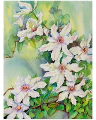 """Trademark Art 'White Clematis' Graphic Art Print on Wrapped Canvas ALI30548-CGG Size: 47"""" H x 35"""" W x 2"""" D"""