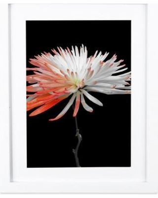 """SafiyaJamila Featured Flower II Framed Graphic Art in Black and Orange Featured Flower II_FrameM3 / M6 Size: 20"""" H x 16"""" W x 1"""" D"""
