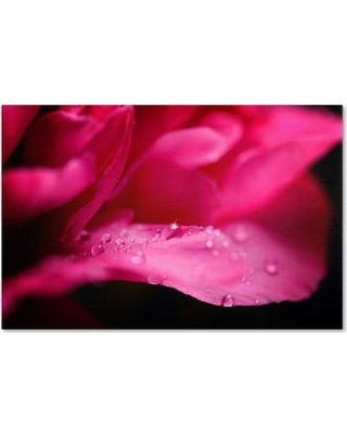 """Trademark Fine Art """"Peony Drops"""" by Philippe Sainte-Laudy Photographic Print on Wrapped Canvas PSL0289-C Size: 30"""" H x 47"""" W x 2"""" D"""