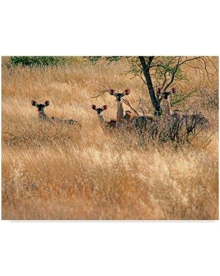 """Trademark Art 'Ears' Photographic Print on Wrapped Canvas ALI36765-CGG Size: 24"""" H x 32"""" W x 2"""" D"""