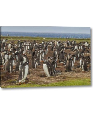 "Ebern Designs 'Falkland Islands Bleaker Island Gentoo Penguins' Photographic Print on Wrapped Canvas BI156021 Size: 11"" H x 16"" W x 1.5"" D"