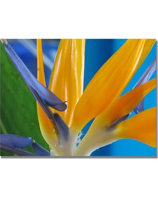 """Trademark Fine Art """"Bird of Paradise"""" by Kathie McCurdy Framed Photographic Print on Wrapped Canvas KM0233-C Size: 35'' H x 47'' W x 2'' D"""