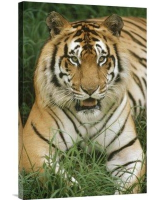 """East Urban Home Native to India and Southeast Asia Hawaii Hilo Zoo 'Bengal Tiger Portrait' Photographic Print on Wrapped Canvas NNAI1436 Size: 36"""" H x 24"""" W"""