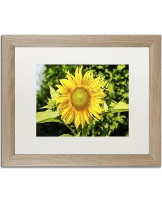 """Trademark Art 'Just a Sunflower' by Framed Photographic Print on Canvas KS01194-T1114MF / KS01194-T1620MF Size: 16"""" H x 20"""" W x 0.5"""" D"""