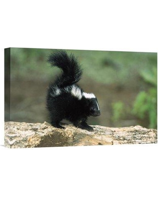 """East Urban Home North America 'Striped Skunk Kit on Log with Raised Tail to Spray' Photographic Print on Wrapped Canvas OOBJ5001 Size: 20"""" H x 30"""" W"""