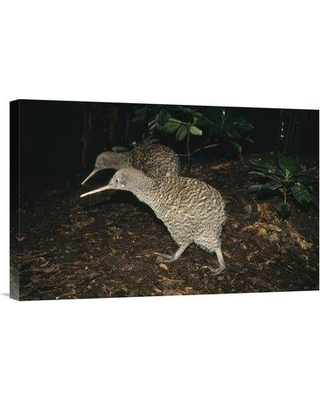 "East Urban Home 'Great Spotted Kiwi Breeding Pair New Zealand' Photographic Print EAAC8758 Size: 16"" H x 24"" W Format: Wrapped Canvas"