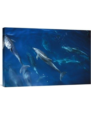 "East Urban Home 'Bottlenose Dolphin Pod Galapagos Islands Ecuador' Photographic Print EAAC8664 Size: 20"" H x 30"" W Format: Wrapped Canvas"