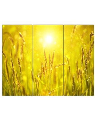 Design Art 'Yellow Grass Flower at Sunset' 3 Piece Photographic Print on Wrapped Canvas Set PT14462-3P