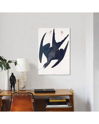 """East Urban Home 'Frigate Pelican' Graphic Art Print on Canvas ERBR0949 Size: 26"""" H x 18"""" W x 0.75"""" D"""