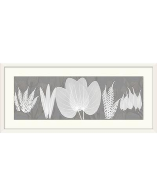 """Great Big Canvas 'Beauty X-Ray' by Albert Koetsier Photographic Print 1937204_1 Size: 20"""" H x 44"""" W x 1"""" D Format: White Framed"""