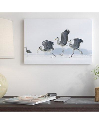 """East Urban Home Germany Usedom 'Grey Heron Trio Fighting Over Fish' Photographic Print on Wrapped Canvas NNAI3512 Size: 20"""" H x 30"""" W"""