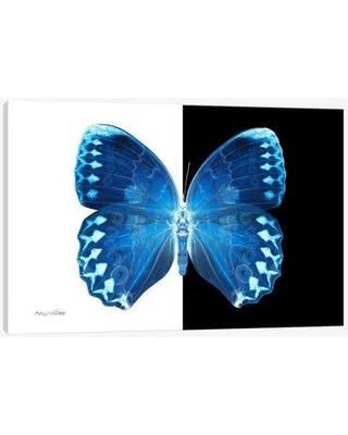 "East Urban Home 'Miss Butterfly X-Ray XIX' Graphic Art Print on Canvas EAOU2909 Size: 8"" H x 12"" W x 0.75"" D"