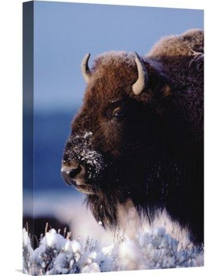 """East Urban Home 'American Bison Portrait' Photographic Print on Wrapped Canvas NNAI3087 Size: 36"""" H x 24"""" W"""