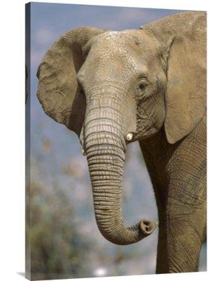"""East Urban Home 'African Elephant Portrait Native to Africa' Photographic Print EAAC8208 Size: 36"""" H x 24"""" W Format: Wrapped Canvas"""