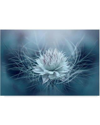 """East Urban Home 'Love in a Mist' Photographic Print on Wrapped Canvas W000817850 Size: 16"""" H x 24"""" W x 2"""" D"""