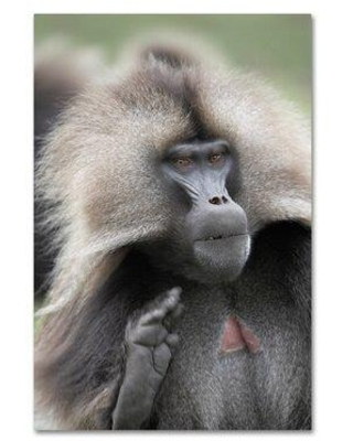 """Trademark Fine Art 'Monkey' Photographic Print on Wrapped Canvas, Canvas & Fabric in Brown, Size 19"""" H x 12"""" W 