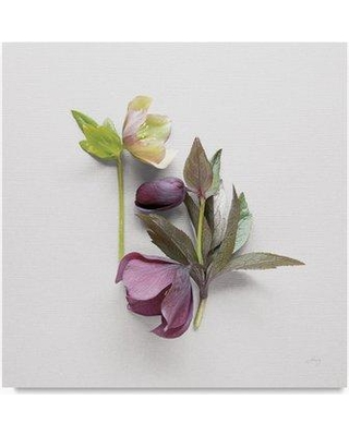 """Trademark Art 'Hellebore Study VII' Photographic Print on Wrapped Canvas WAP03185-C Size: 35"""" H x 35"""" W"""