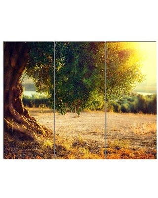 Design Art 'Stunning Olive Trees at Sunset' 3 Piece Photographic Print on Wrapped Canvas Set, Canvas & Fabric in Brown | Wayfair PT14274-3P
