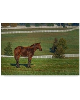 "Trademark Art 'Out Standing in His Field Oil Paint' Photographic Print on Wrapped Canvas ALI34986-CGG Size: 22"" H x 32"" W x 2"" D"