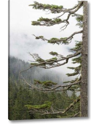 "Millwood Pines 'Washington Mount Rainier NP Evergreens' Photographic Print on Wrapped Canvas BF152161 Size: 24"" H x 16"" W x 1.5"" D"