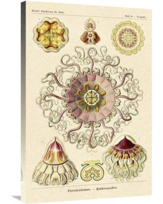 "East Urban Home 'Haeckel Nature Illustrations Jelly Fish 2' Graphic Art Print on Wrapped Canvas ETUC3128 Size: 36"" H x 24"" W x 1.5"" D"