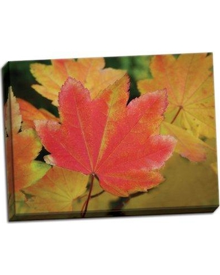 Millwood Pines 'Maple Leaves Perfection II' Photographic Print on Wrapped Canvas BF051082