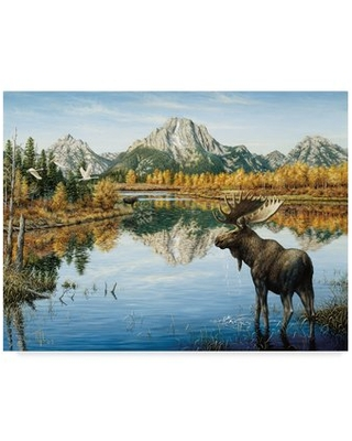 """'Bull Moose' Graphic Art Print on Wrapped Canvas Trademark Fine Art Size: 24"""" H x 32"""" W x 2"""" D"""
