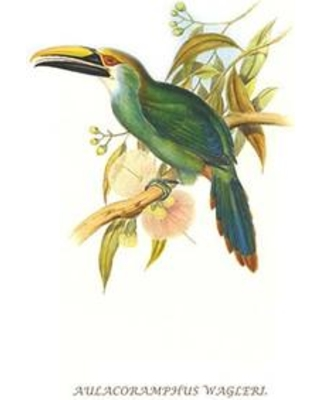 "Buyenlarge 'Wagler's Toucanet' by John Gould Graphic Art 0-587-29291-1 Size: 66"" H x 44"" W x 1.5"" D"