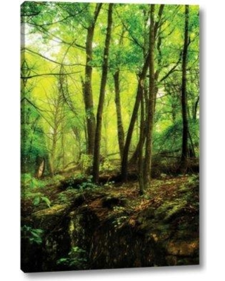 """Ebern Designs 'Deep Woods II' by Alan Hausenflock Giclee Art Print on Wrapped Canvas BF099001 Size: 32"""" H x 21"""" W x 1.5"""" D"""