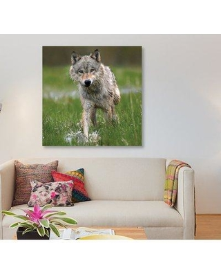 """East Urban Home 'Wolf Walking Through Water North America' Graphic Art Print on Canvas FTCI9313 Size: 12"""" H x 12"""" W x 0.75"""" D"""