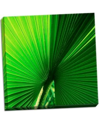 Bay Isle Home 'Palm Frond I' Photographic Print on Wrapped Canvas BF051120