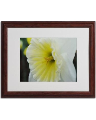 """Trademark Art 'Vitality' by Monica Fleet Framed Photographic Print MF130 Size: 16"""" H x 20"""" W x 0.5"""" D Frame Color: Brown"""