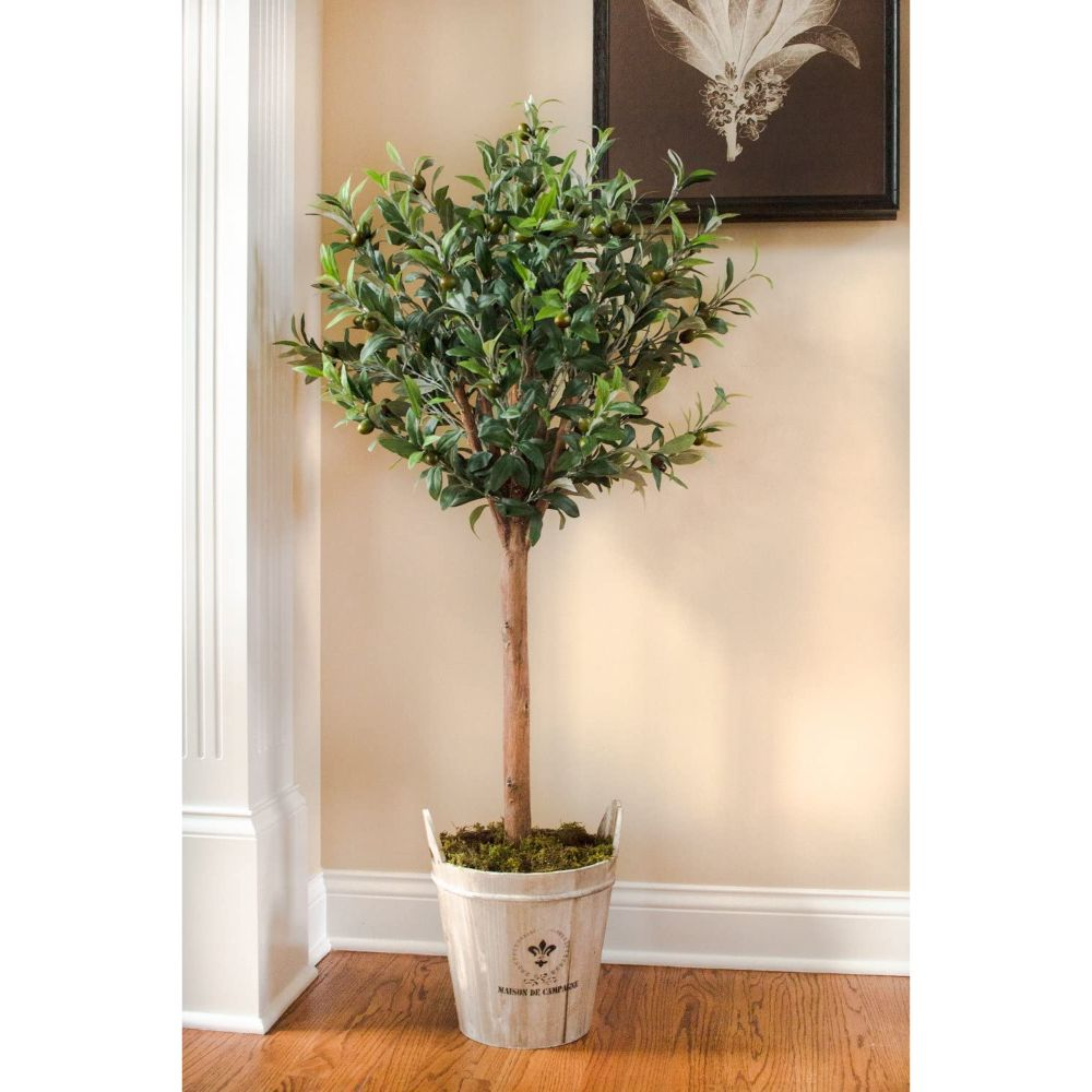 Olive Topiary Tree