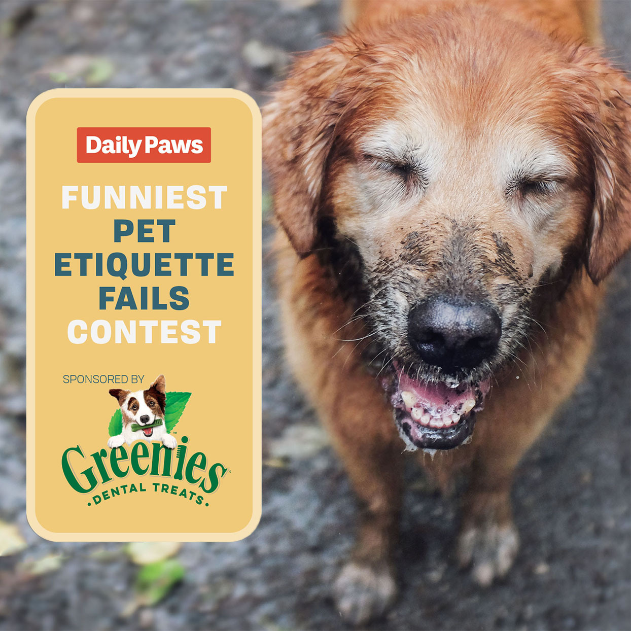 'Funniest Pet Etiquette Fails' Photo Contest 2020