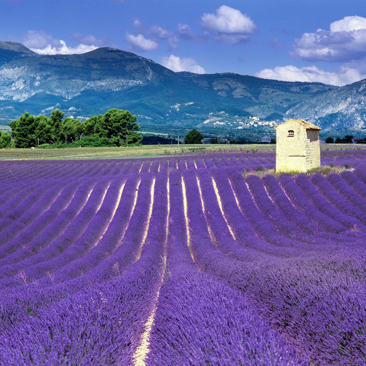 Bike Tour to Provence Sweepstakes