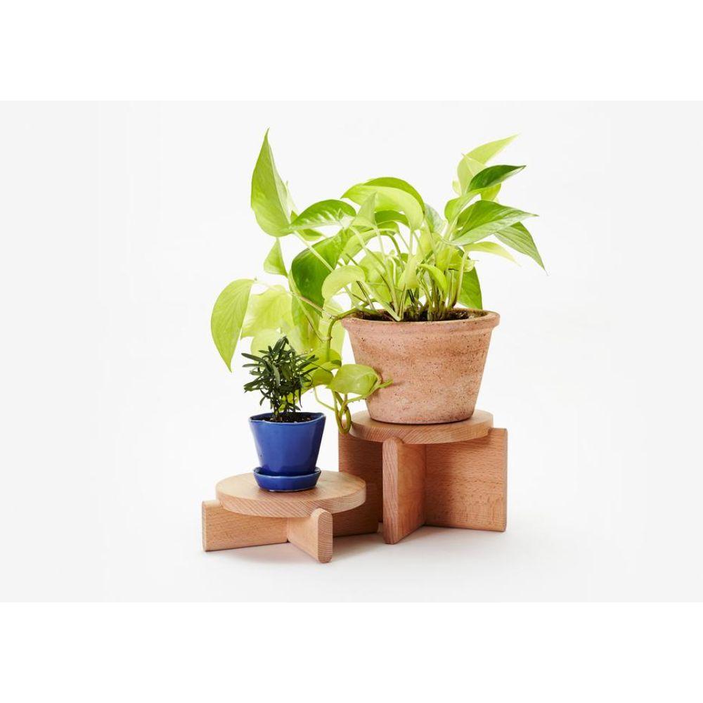 Beech Wood Plant Pedestal
