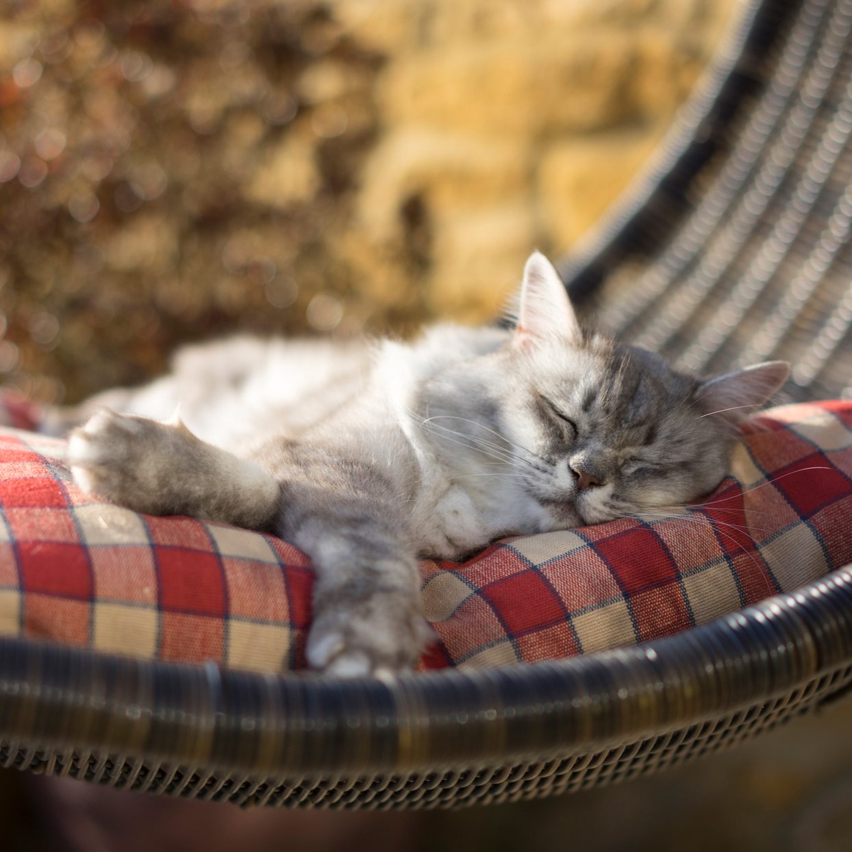 Ultimate Catio for Your Kitty $25,000 Sweepstakes