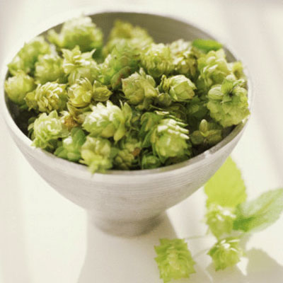 hops-supplements
