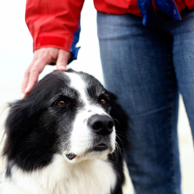 pet-dander-copd