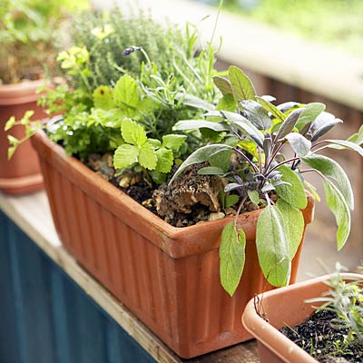 grow-your-herbs