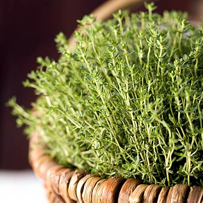 herb-thyme