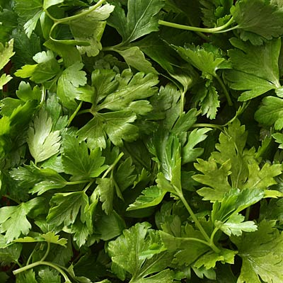 Fight a UTI: Parsley tea