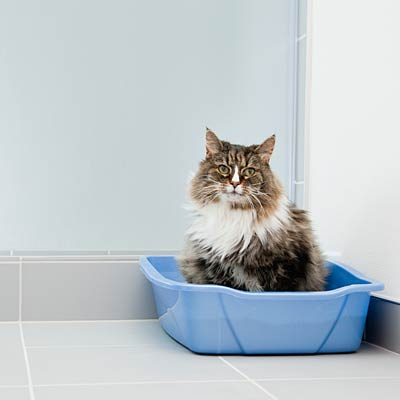 Provide a sufficient number of litter boxes