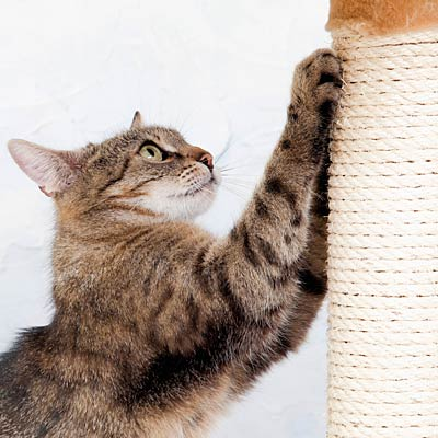 Train your cat to use a scratching post