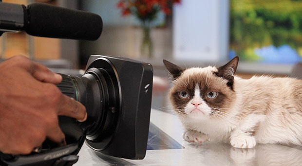 grumpy-cat-video.jpg