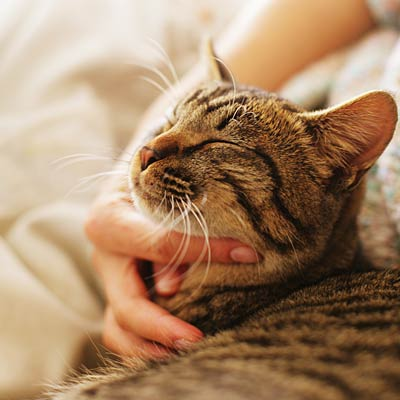 Pets may reduce your blood pressure