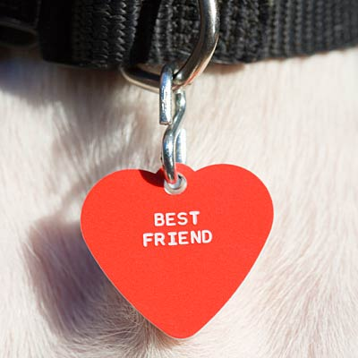 dog-heart-health