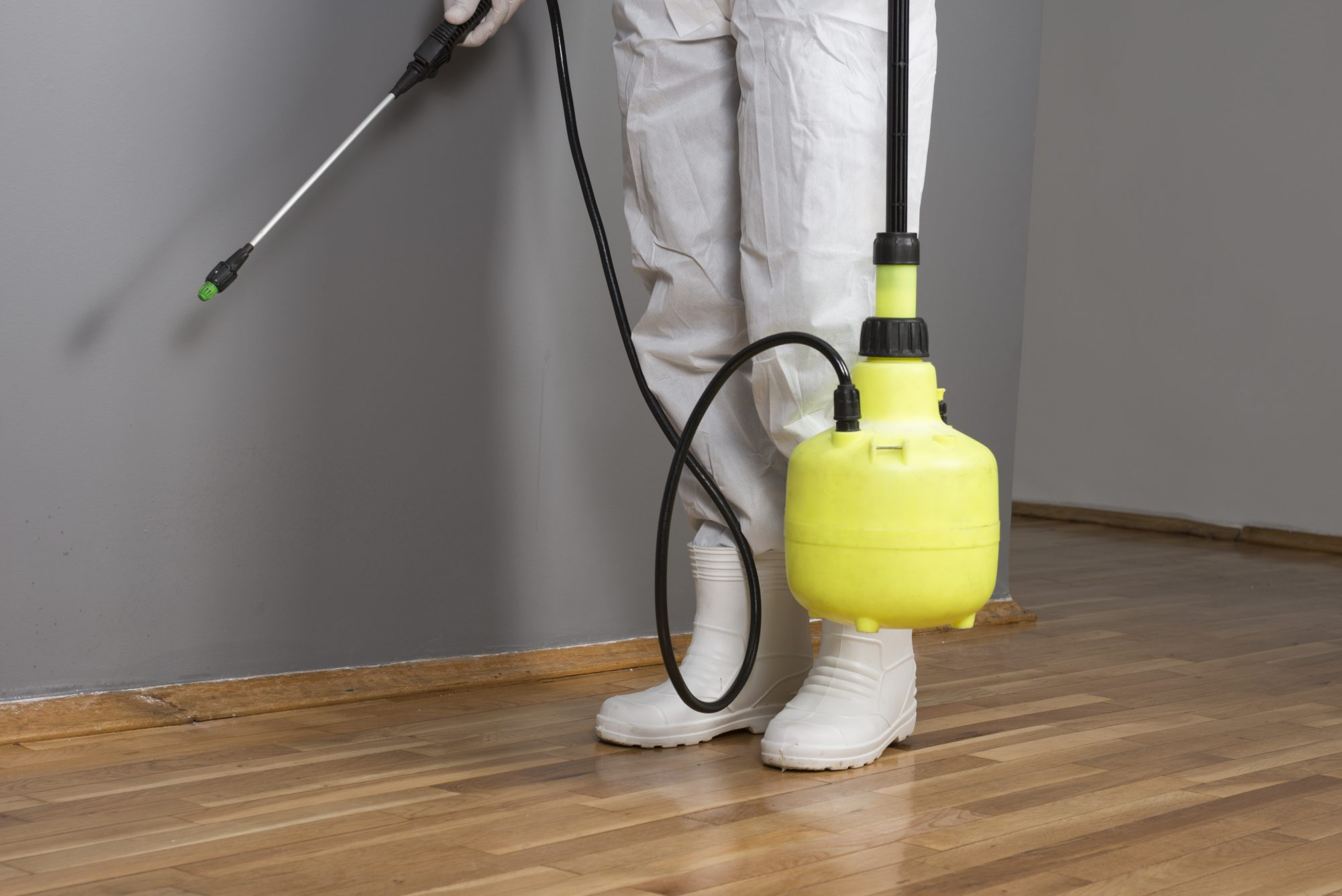 fumigate to remove bed bugs exterminator