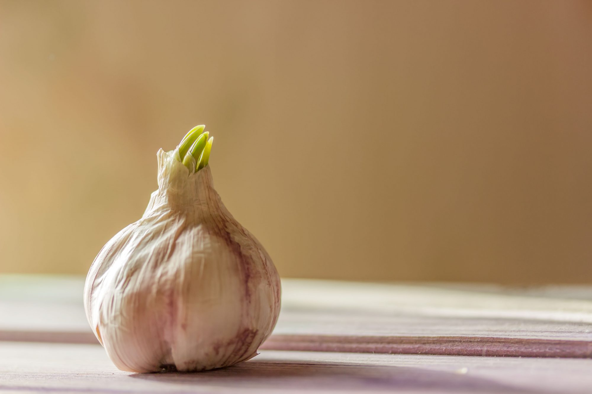 Southern Living Sprouted Garlic