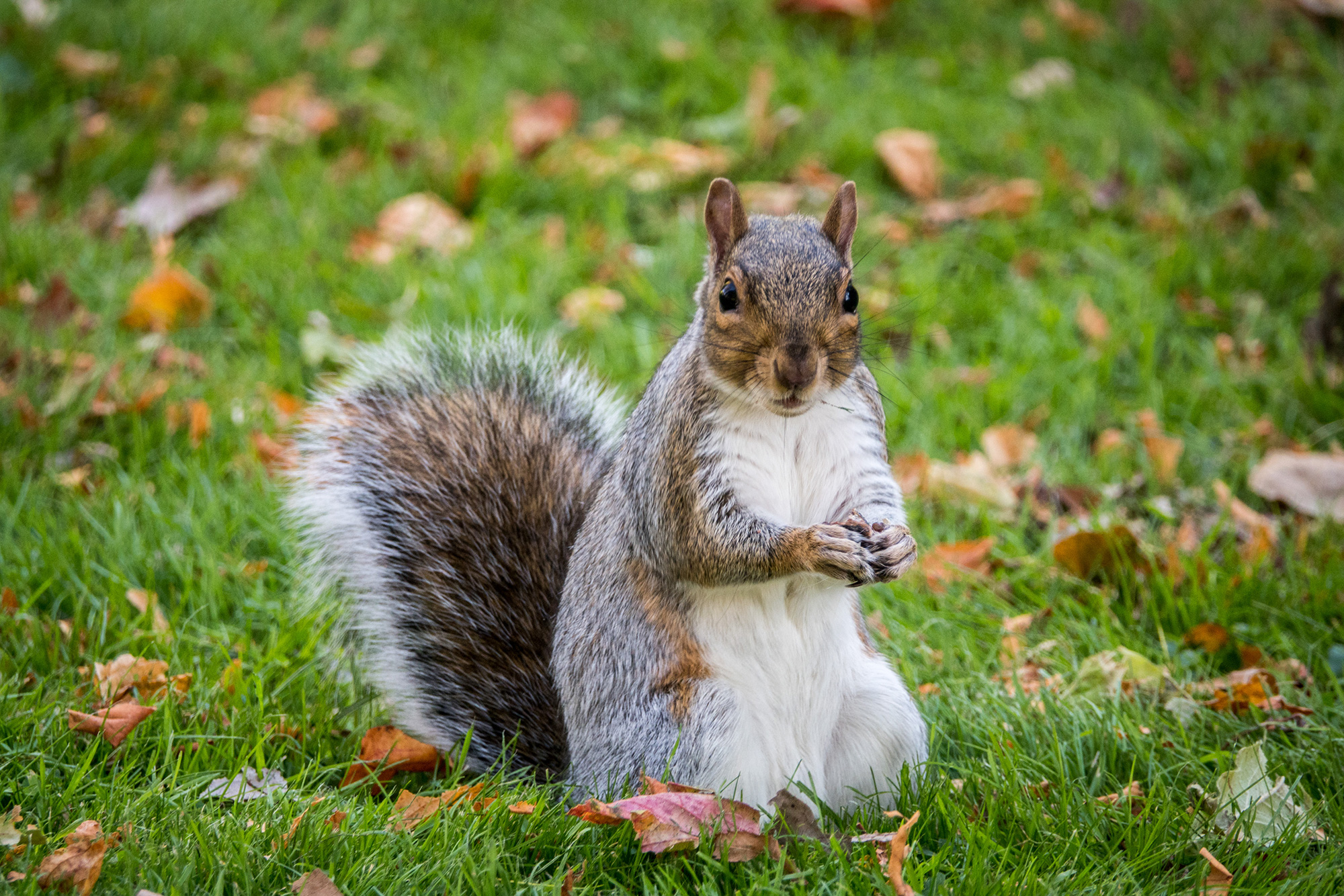 WATCH: Woman Who Brought 'Emotional Support' Squirrel on Plane Removed by Police